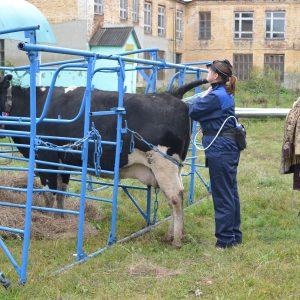 Мастер – класс на тему «Применение лазерного аппарата «СТП -99» для профилактики и лечения животных» (ветеринарная клиника)